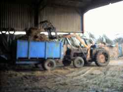 Tom loading our trailer with silage